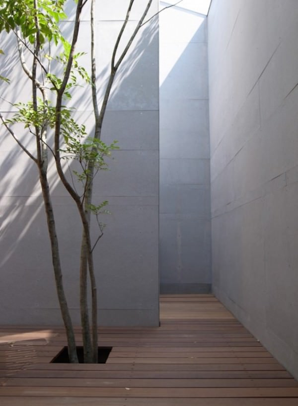 Courtyard-with-tall-walls-and-a-tree-growing-through-the-deck