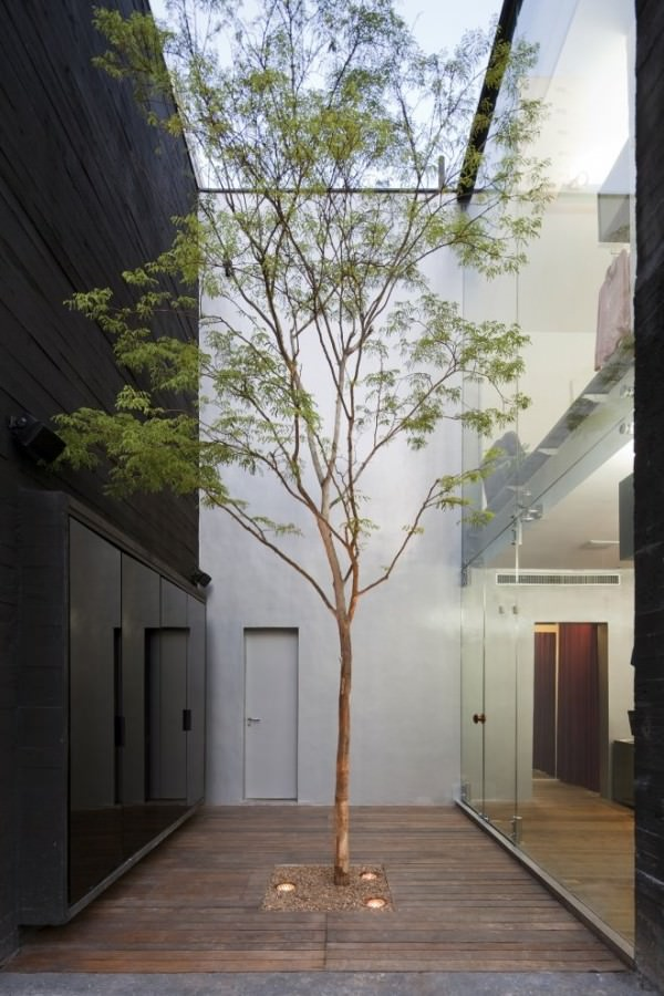 Narrow-courtyard-with-a-single-tall-tree