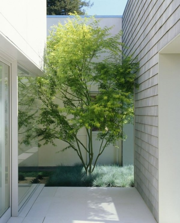 Small-courtyard-with-just-enough-room-for-a-tree