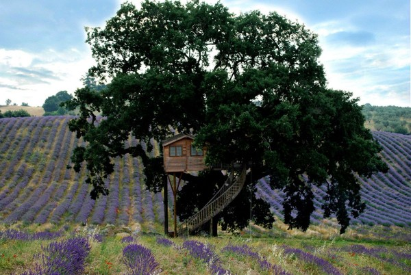 casa in copac 3