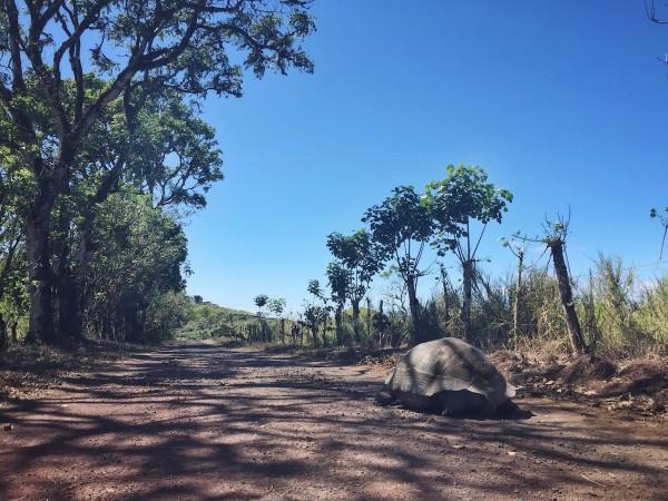 pikaia lodge - resort pe insula galapagos 3