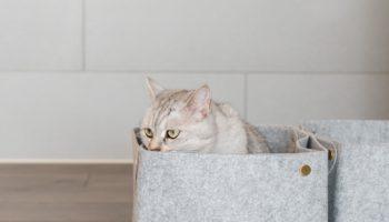 Idei de decoratiuni interioare pentru iubitorii de pisici 19