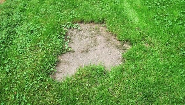 Bare-spots-are-a-common-lawn-issue