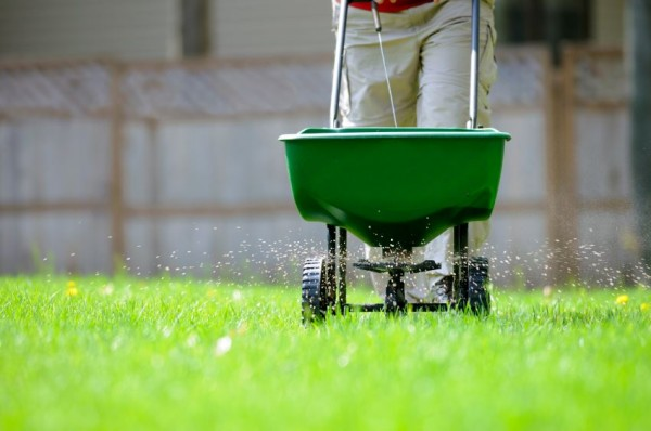 Fertilize-your-lawn-with-care