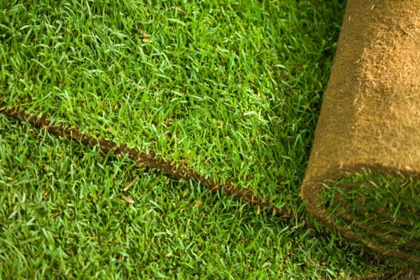 Installing-sod-is-another-option-for-rejuvenating-the-yard
