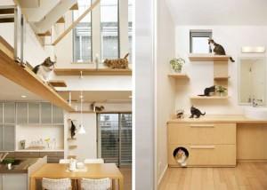 camera-pisica (1)