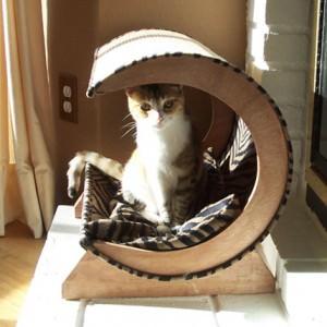 camera-pisica (3)