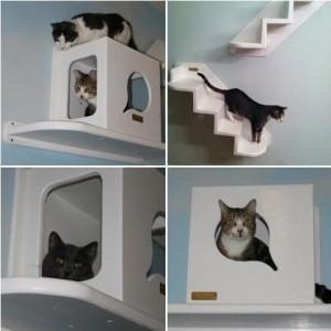 camera-pisica (6)