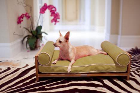 piese de mobilier animale de companie (1)
