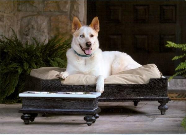 mobilier animale de companie (6)