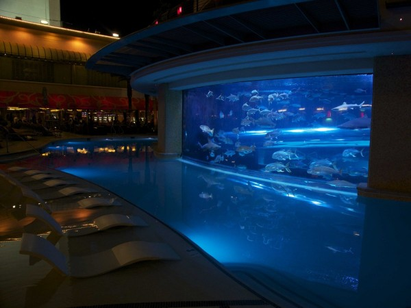 swim-with-sharks-and-dozens-of-different-types-of-fish-in-the-tank-an-aquarium-pool-at-the-golden-nugget-hotel-in-las-vegas